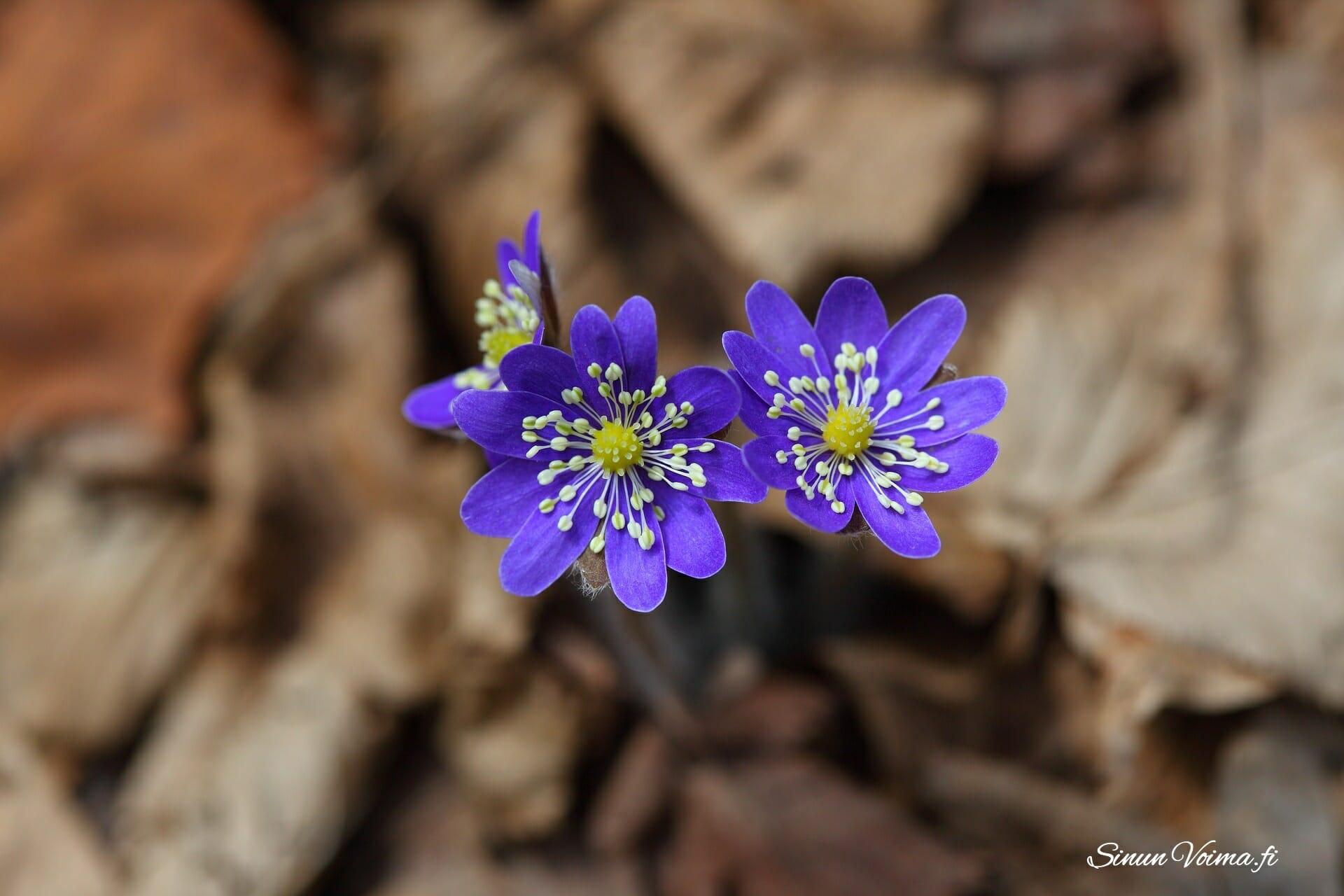 Kehon kevätsiivousta